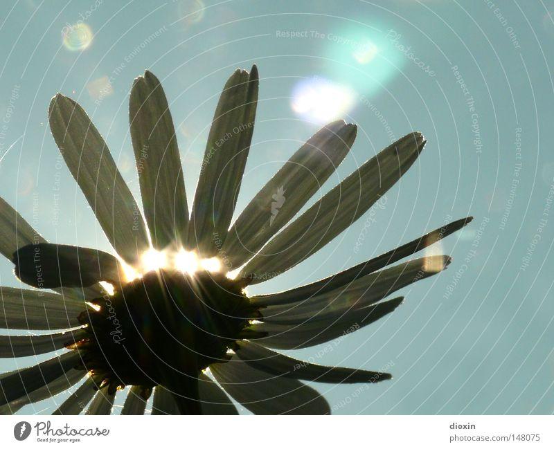 Sky Nature Blue Plant Sun Flower Spring Blossom Sadness Lighting Power Force Growth Hope Blossoming Solar Power