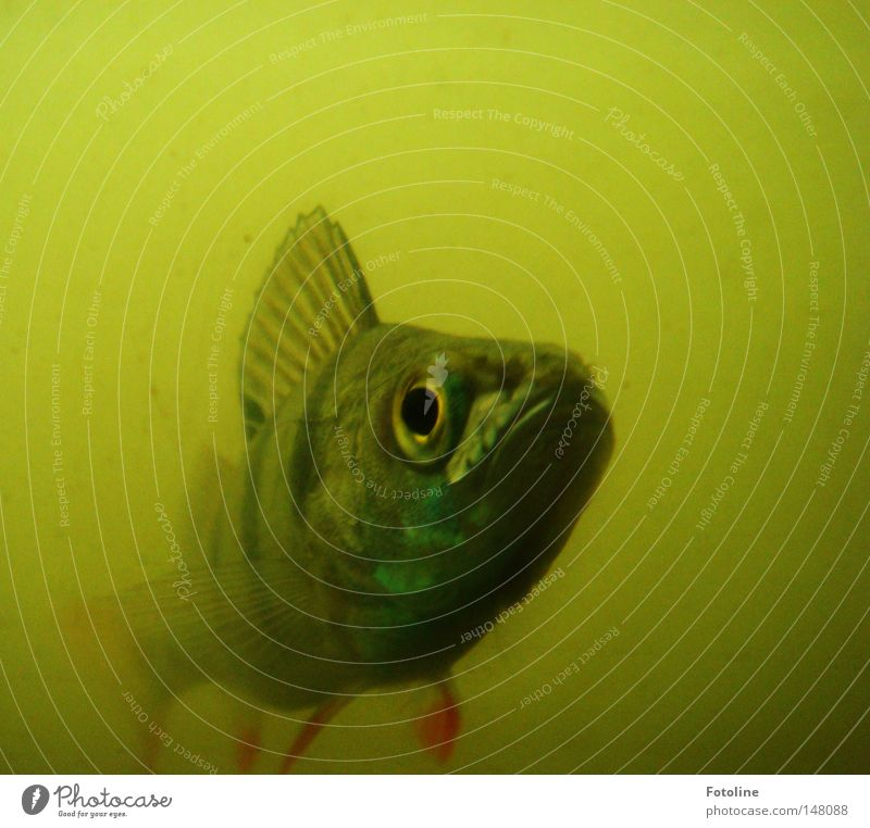 Water Green Red Eyes Yellow Autumn Fish Fish Pond Snout Muzzle Dreary Animal Fish eyes Fin Underground