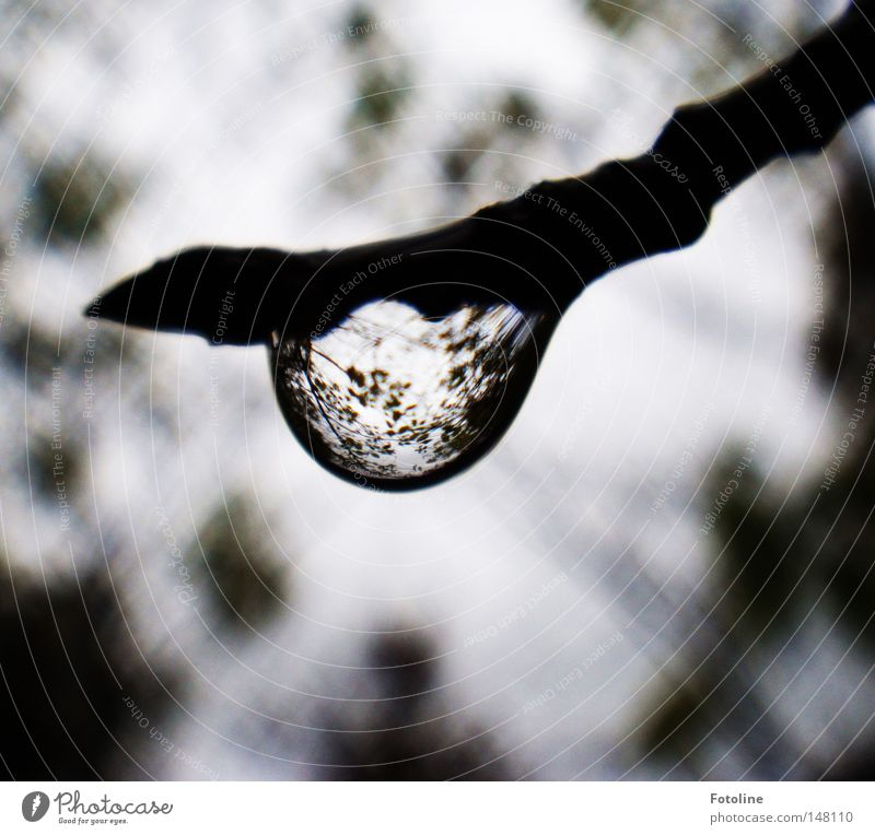 autumn rain Forest Pond Rain Autumn Autumnal Cold Wet Clouds Branch Tree Seasons Drops of water Magnifying glass Bud