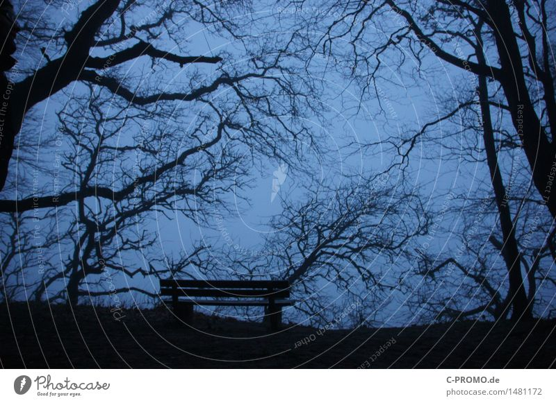 deserted Environment Sky Tree Garden Meadow Forest Sadness Grief Death Loneliness Transience Bench Empty Winter Colour photo Subdued colour Exterior shot