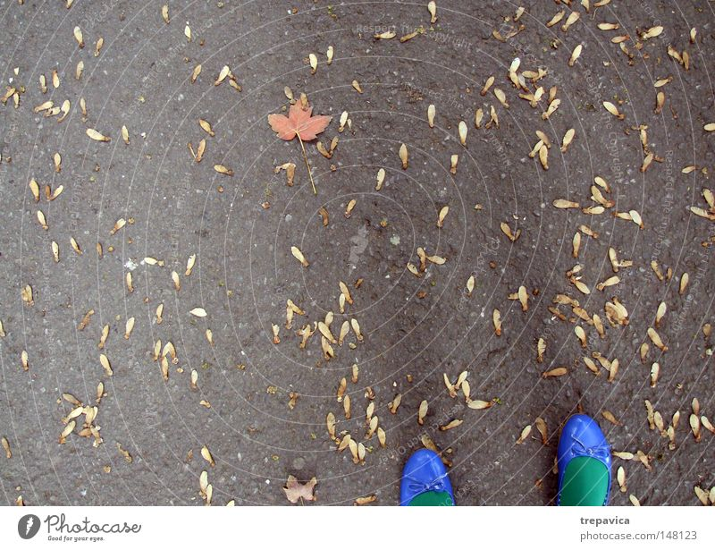 autumn Footwear Blue Green Autumn Woman September Concrete Leaf Yellow Orange Asphalt Multicoloured October November Colour Autumnal colours Autumn leaves