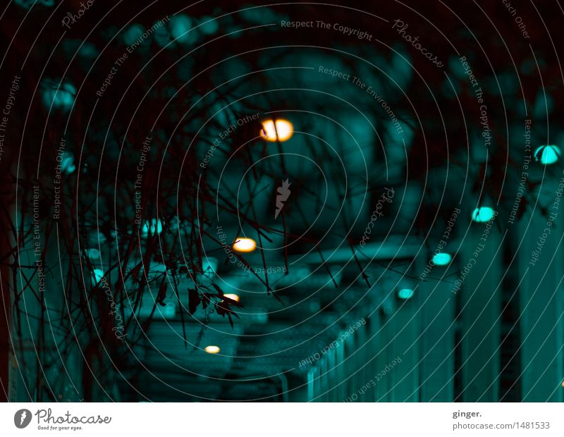 Ground Control to Major B. Cologne Deserted Tunnel Manmade structures Architecture Wall (barrier) Wall (building) Train travel Emotions Moody Sadness