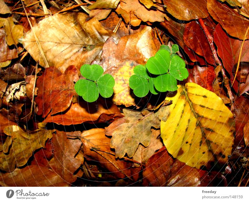 ::: Good luck! ::: Happy Cloverleaf Green Autumn Leaf Yellow Ground Autumn leaves Hedgehog Deciduous tree Multicoloured Environment Ecological Photosynthesis