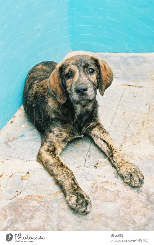 Blue Calm Relaxation Dog Corner Break Lie Mammal Loyalty Puppy Puppydog eyes