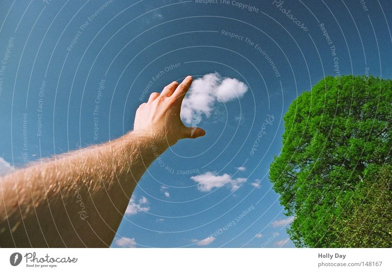 Got you... Clouds Sky Blue Beautiful weather Blue sky Absorbent cotton Sheep Altocumulus floccus Tree Green Arm Fingers Hand Outstretched Grasp Treetop