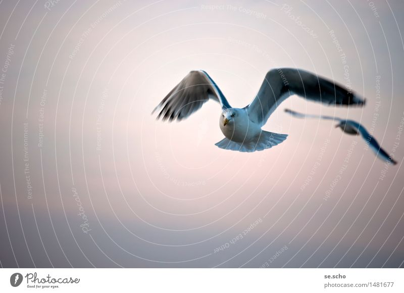 Nature Beautiful Animal Far-off places Cold Environment Movement Natural Flying Moody Bird Together Bright Horizon Contentment Elegant