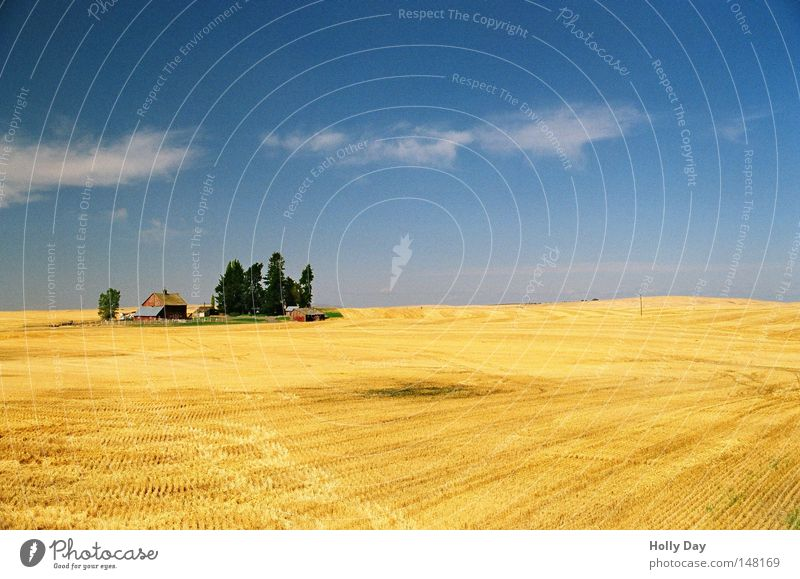 Old McDonald had a farm... Field Tree Pol-filter Blue Sky Beautiful weather Harvest Yellow Gold Golden yellow Pattern Horizon Summer Wheatfield Far-off places