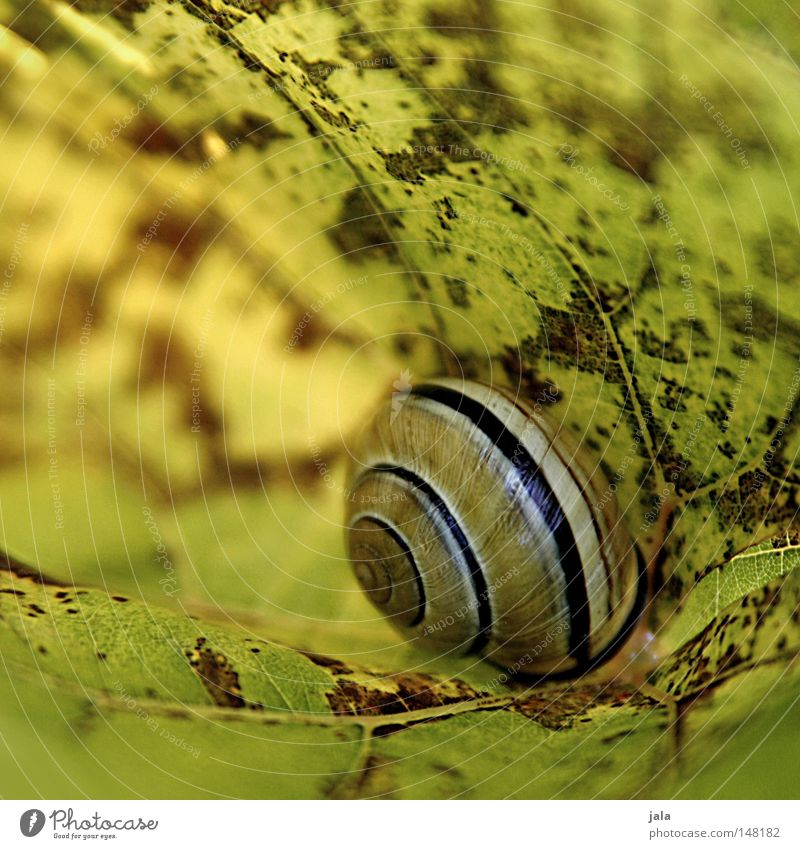 in need of protection Snail Snail shell Protection Leaf Green Yellow Autumn creep away