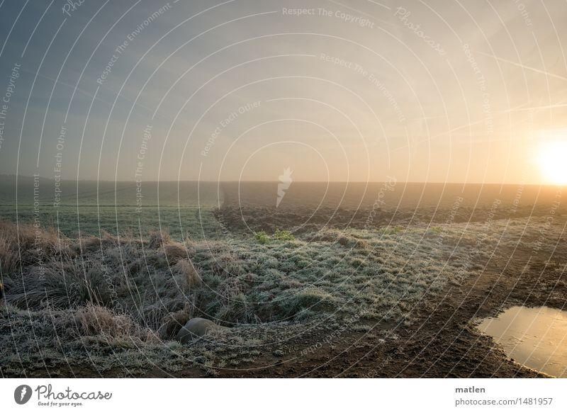 cool morning Landscape Plant Sky Cloudless sky Horizon Sunrise Sunset Winter Weather Beautiful weather Ice Frost Meadow Field Freeze Blue Brown Green White Cold