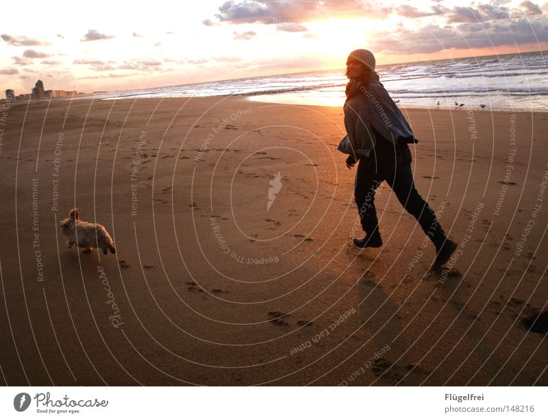freedom Joy Playing Freedom Sun Beach Ocean House (Residential Structure) Feminine Friendship Youth (Young adults) Ear Legs Sand Sky Clouds Warmth High-rise Dog