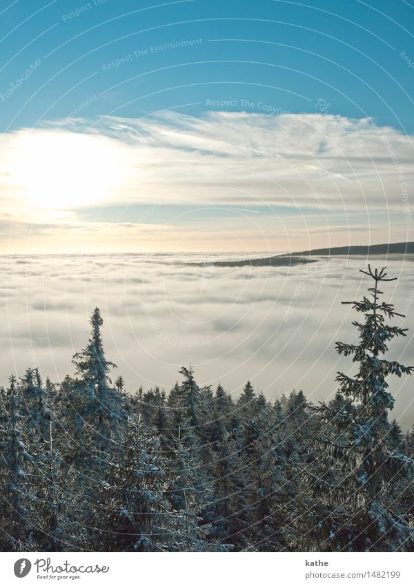 Sky Nature Blue Tree Landscape Clouds Animal Winter Forest Cold Snow Moody Horizon Weather Fog Air