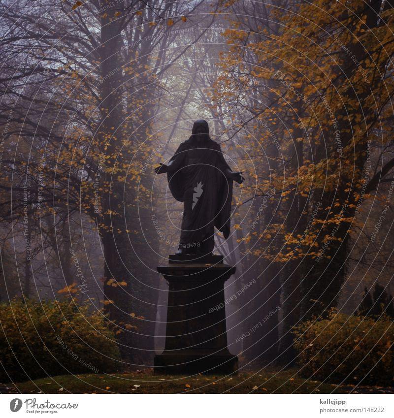 Human being Man Hand Tree Autumn Life Death Religion and faith Back Fog Fingers Church Grief Education Peace Fluid
