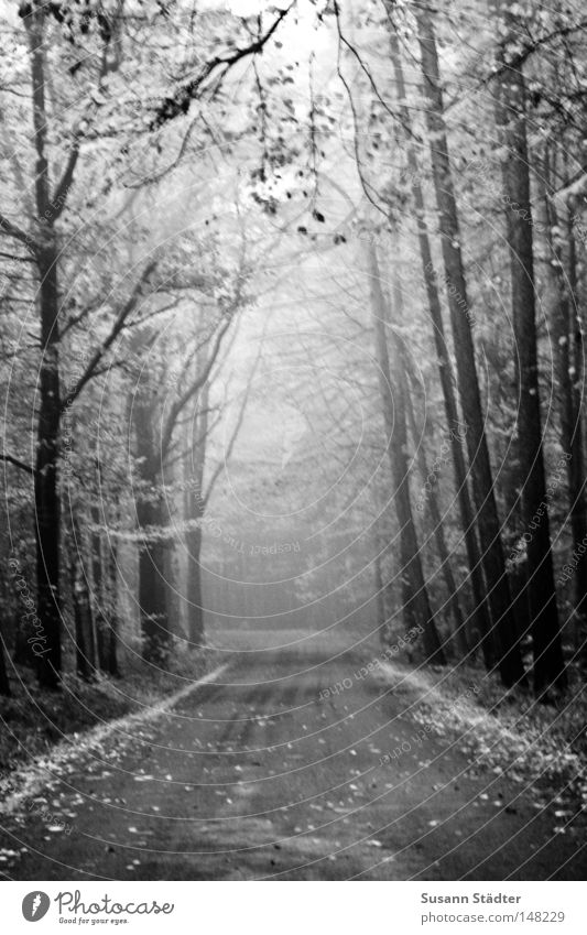cloud forest Fog Tree Forest Street Leaf Deciduous tree Loneliness Going Sleep Cold Freeze Drops of water Dew Autumn Winter Snow