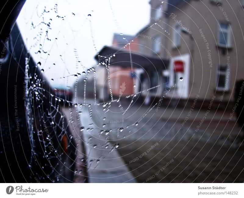 i think i spider! Spider Spider's web Mittweida district Motor vehicle Blue Street Side mirror Mirror Driving Cold Freeze Drops of water Dew