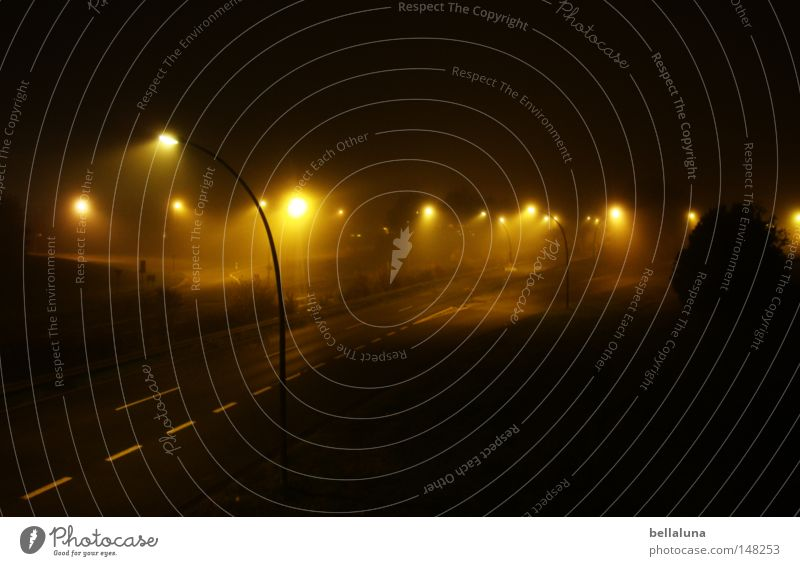Tree Street Dark Emotions Lanes & trails Moody Lamp Bright Rain Weather Fog Bridge Perspective Longing Lantern Vantage point