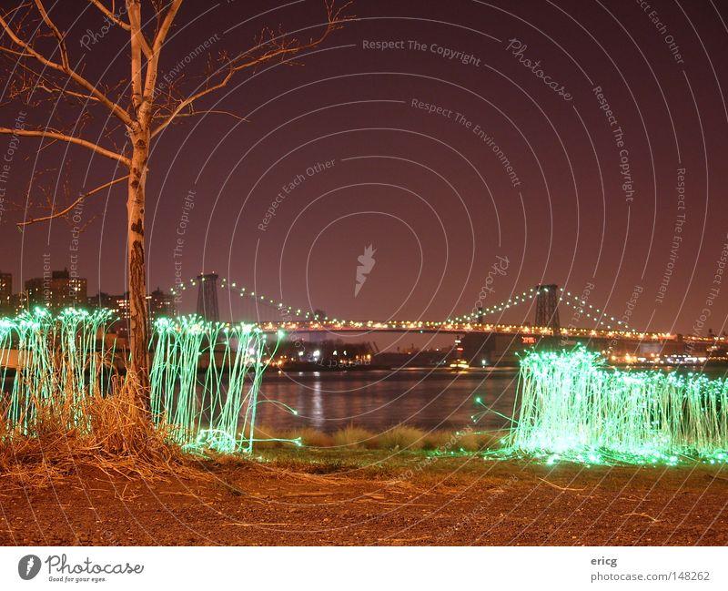 Tree Green Grass Bridge USA Violet Americas New York City Bleak