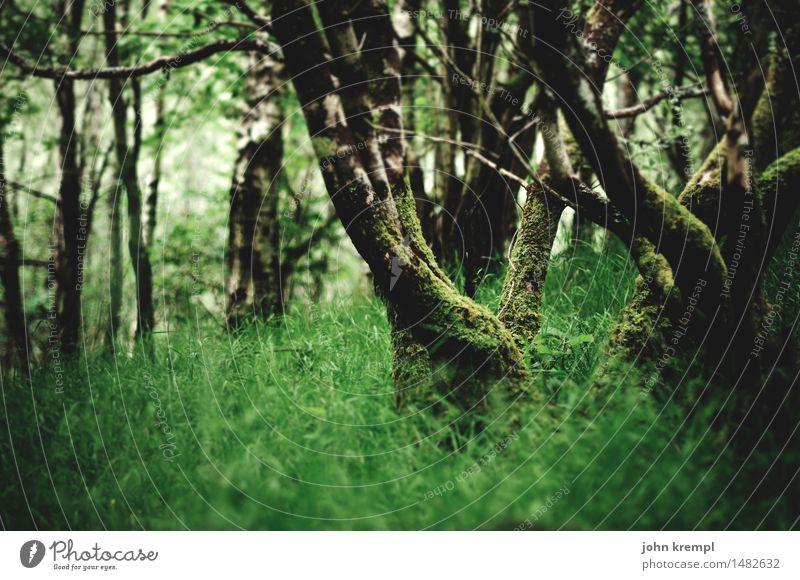 Little Green Environment Nature Landscape Spring Summer Tree Grass Park Forest Virgin forest Scotland Growth Friendliness Healthy Positive