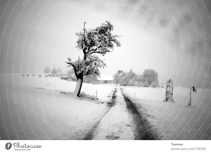 snowy Far-off places Winter Snow Tree Street Lanes & trails Gloomy Gray Boredom Loneliness Doomed Country road Cover up Snow layer in grey Americas snowed over