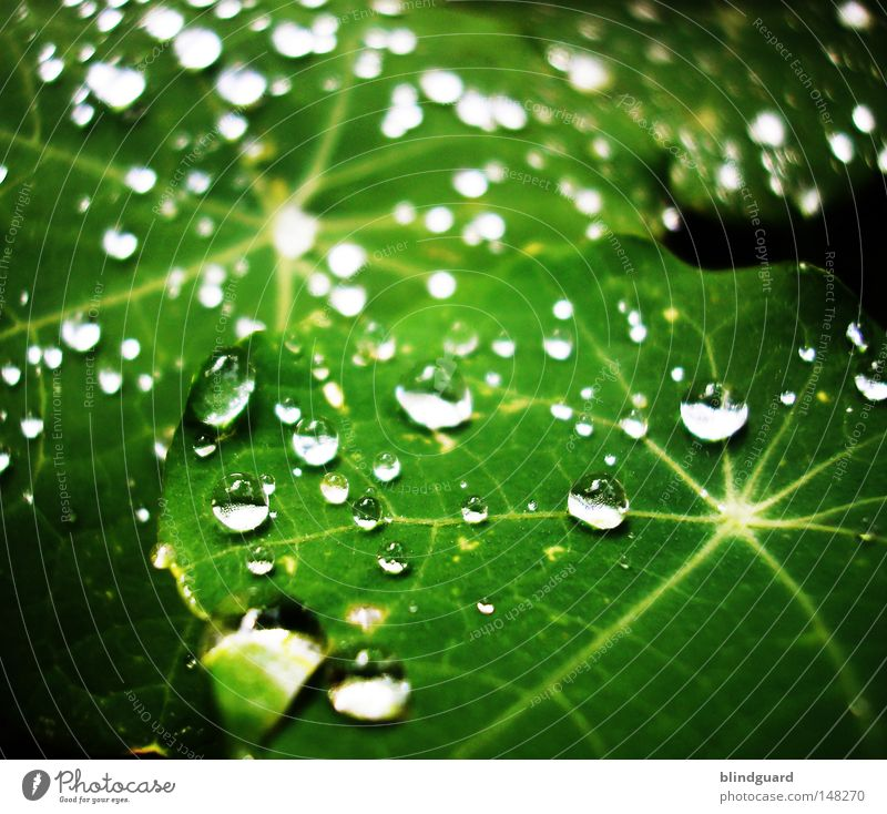 Green Water Leaf Life Small Line Rain Glittering Fresh Drops of water Large Wet Star (Symbol) Drop Near Silver