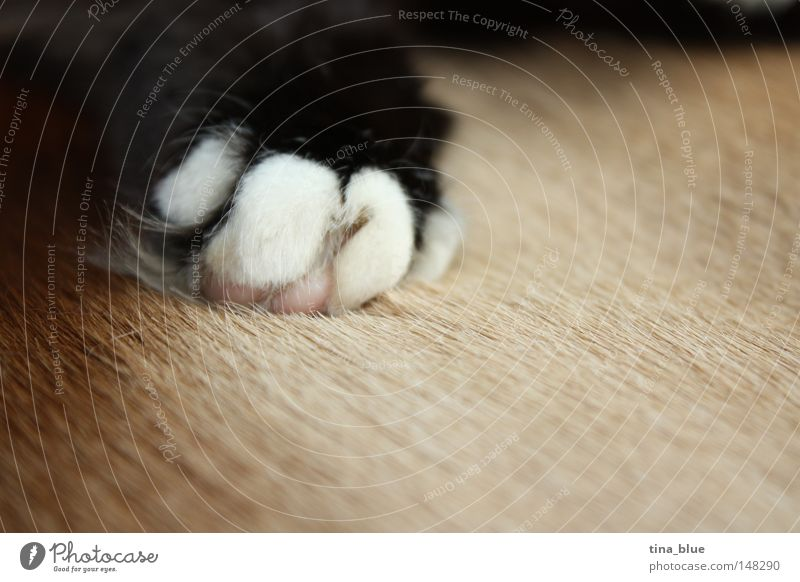 cat's paw Cat Black & white photo Paw Pelt Brown Claw Calm Sleep Peace Macro (Extreme close-up) Mammal Close-up Peaceful bliss depth blur