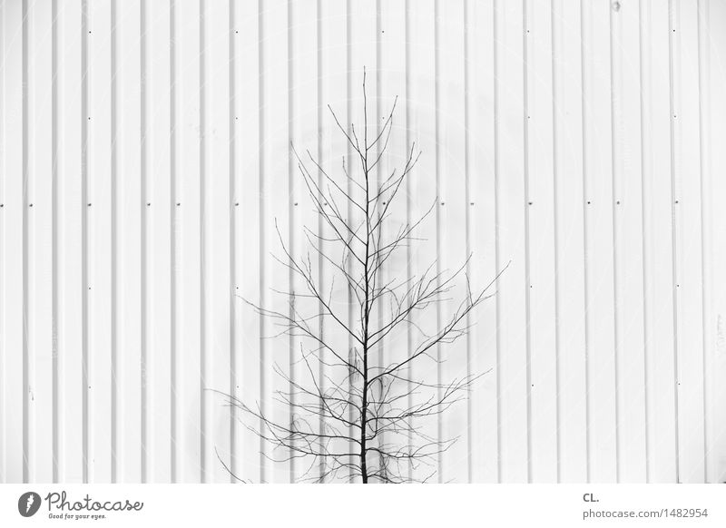 Nature Tree Environment Wall (building) Wall (barrier) Small Line Growth