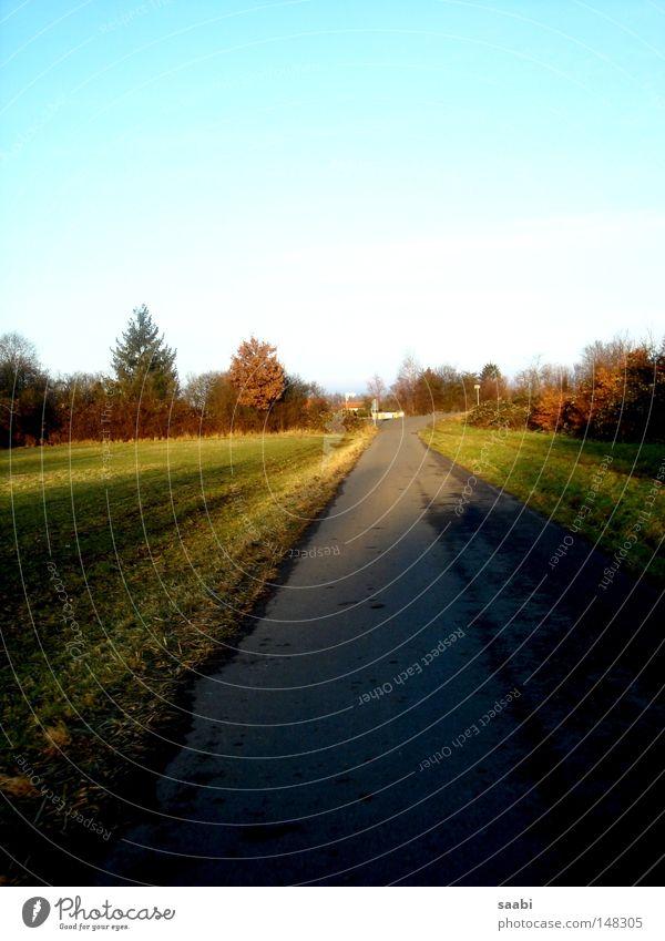 Sky Tree Calm Loneliness Street Autumn Grass Dream Field Fresh Vantage point Asphalt Clarity