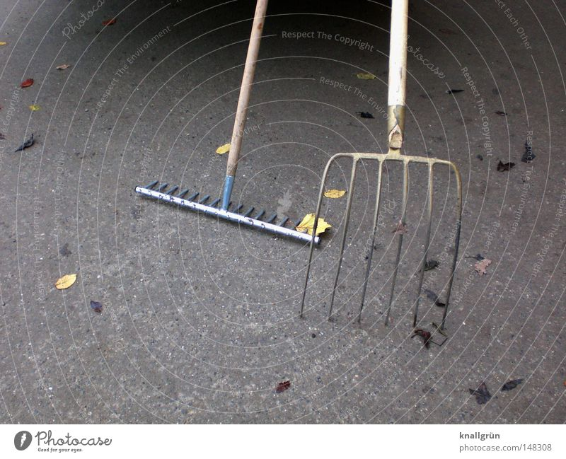 Leaf Work and employment Autumn Wood Metal Clean Profession Services Craft (trade) Parking Completed Gardener Tidy up Closing time Pitchfork Rake