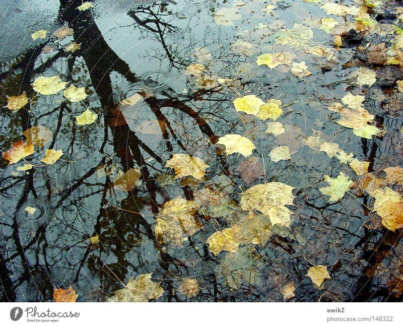 Nature Plant Water Tree Landscape Leaf Dark Environment Autumn Think Rain Idyll Climate Transience Beautiful weather Seasons