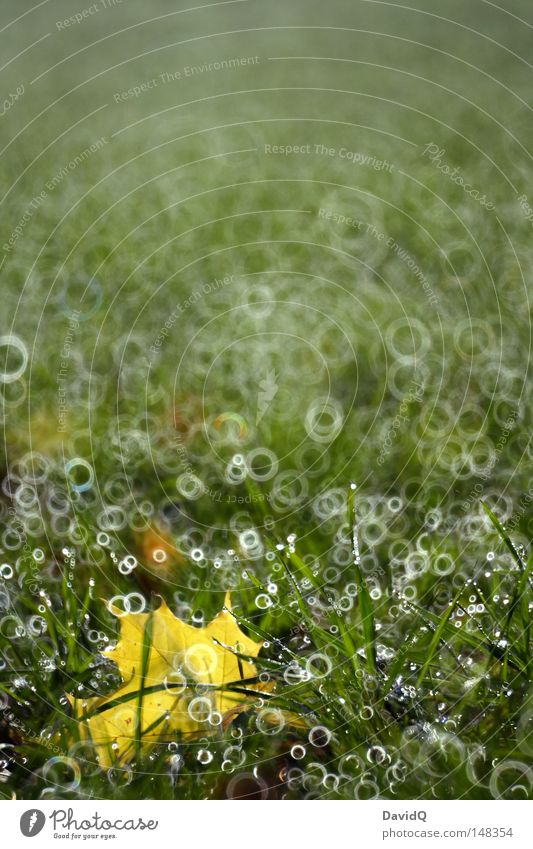 Green Leaf Yellow Autumn Meadow Grass Field Fog Drops of water Circle Lawn Transience Pasture Dew Hallway Floor mat