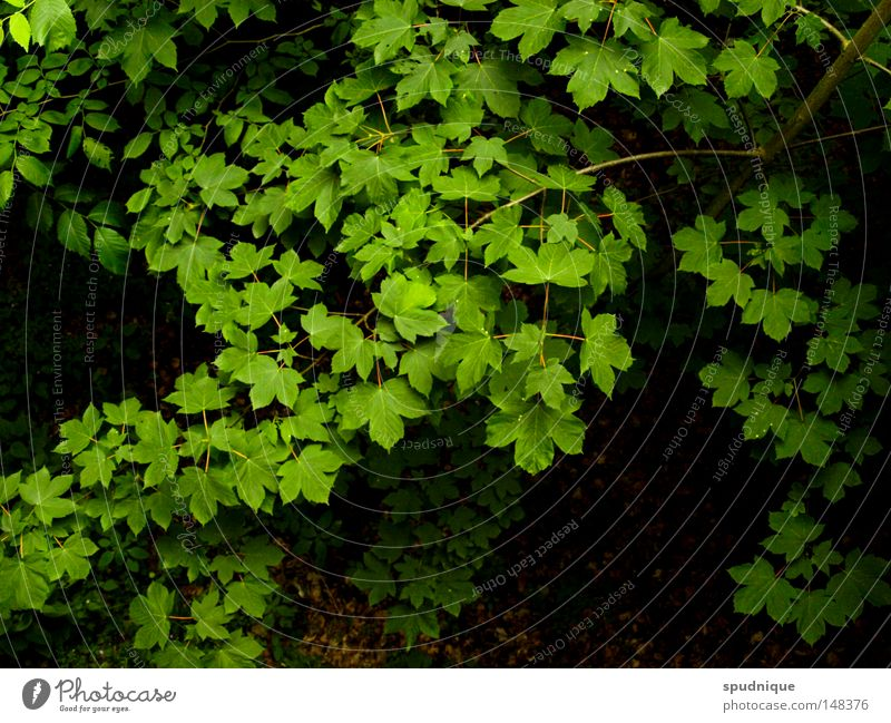 Nature Green Beautiful Tree Summer Colour Leaf Fresh Perspective Roof Branch Twig Leaf green Deciduous tree Leaf canopy