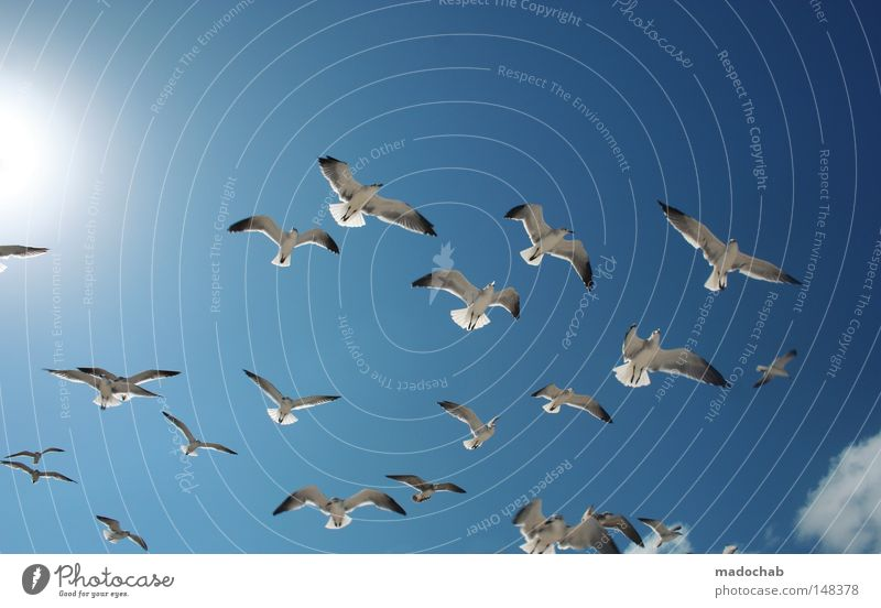 SWARM INTELLIGENCE Sky Air Free Bird Flock of birds Glide Hover Movement Peace Sporting event Competition Flying Freedom seagull seagulls Blue flown Multiple