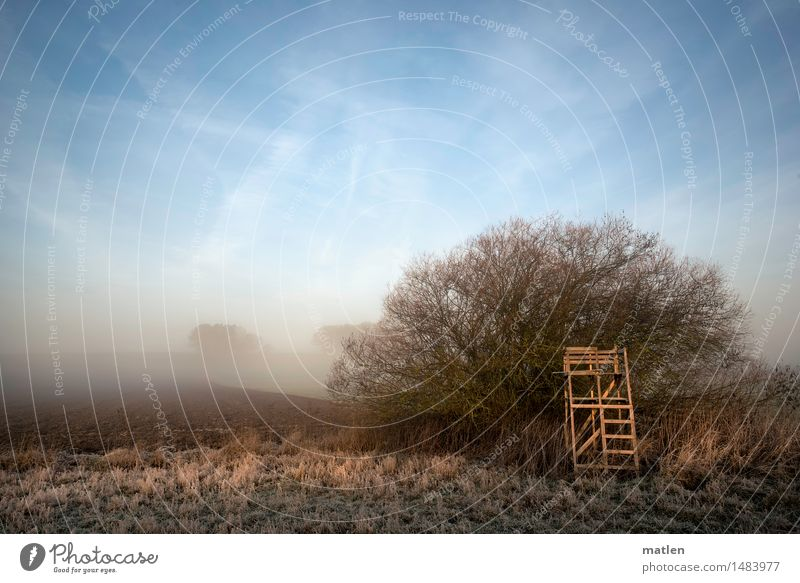 high stand Landscape Sky Cloudless sky Winter Weather Beautiful weather Fog Plant Tree Grass Bushes Meadow Field Deserted Hunting Blind Cold Blue Brown White
