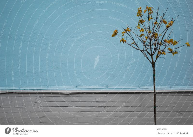 towards the end Light blue Leaf Autumn To fall Cold Motionless Gray Wall (building) Badlands Bleak Freeze Wall (barrier) Stone Line Few Simple