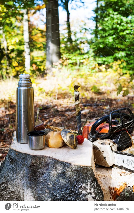 breakfast break Food Sausage Dough Baked goods Roll Nutrition Breakfast Coffee Work and employment Agriculture Forestry Nature Autumn Beautiful weather Tree
