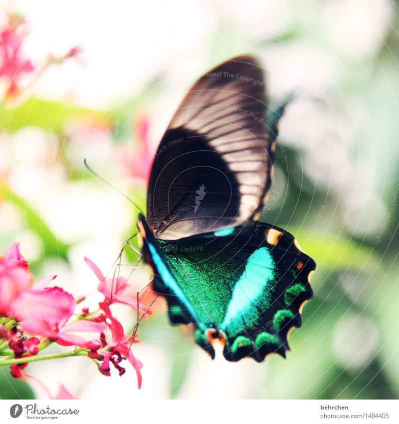 ...afterwards Nature Plant Animal Flower Bushes Leaf Blossom Garden Park Meadow Wild animal Butterfly Wing 1 Observe Blossoming Fragrance Flying To feed