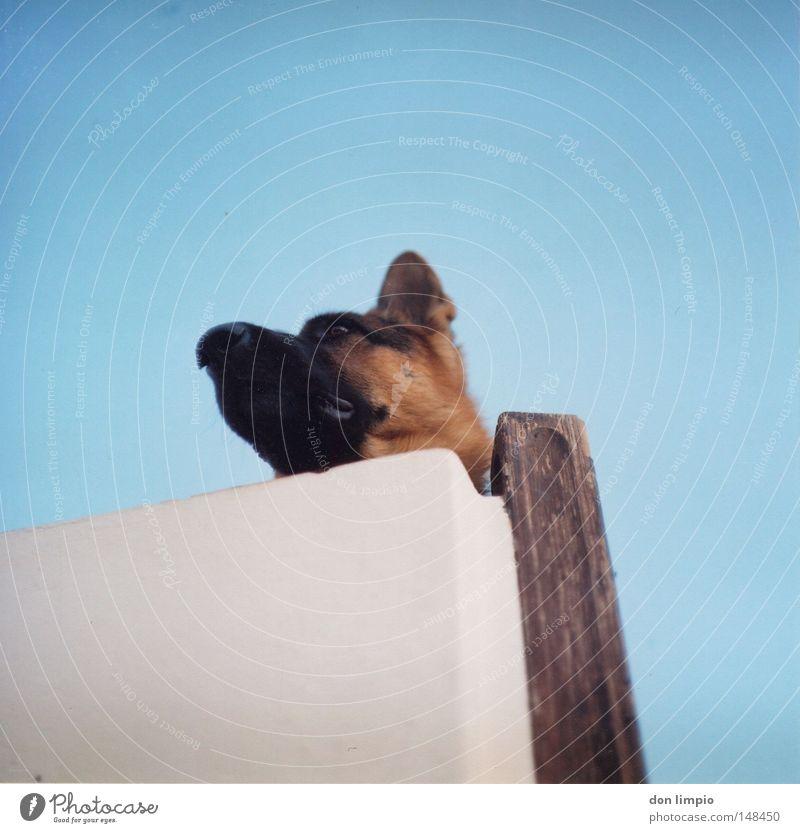 Dog Blue White Animal House (Residential Structure) Wall (building) Ear Pelt Analog Pet Mammal Medium format Film Roll film