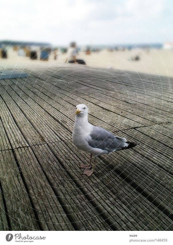 Day at the sea Relaxation Vacation & Travel Tourism Summer Beach Ocean Nature Animal Sand Sky Horizon Beautiful weather Coast Wild animal Bird Seagull 1 Wood