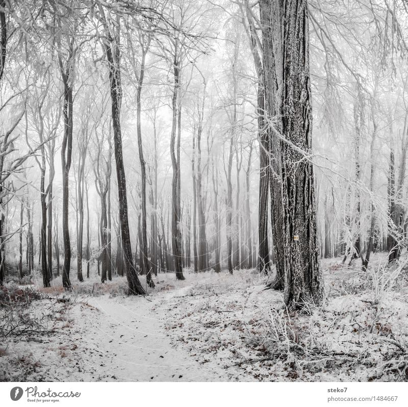 cold forest Winter Ice Frost Snow Forest Freeze Black White Deciduous forest Winter vacation Cold Road marking Subdued colour Exterior shot Deserted