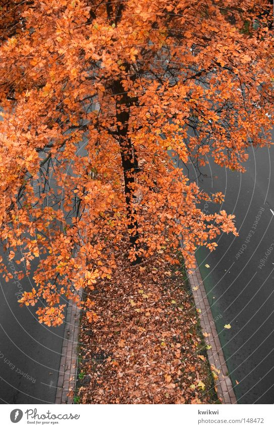 Tree Red Leaf Yellow Street Autumn Gray Orange Blossoming Exhaust gas Faded Intensive Colouring