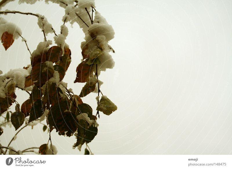 it snows Tree Dreary Winter Monochrome Gloomy Cold Seasons Leaf Snow Nature