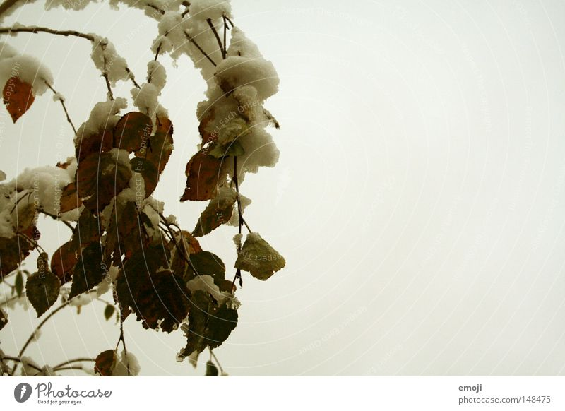 Nature Tree Winter Leaf Cold Snow Gloomy Seasons Dreary Monochrome