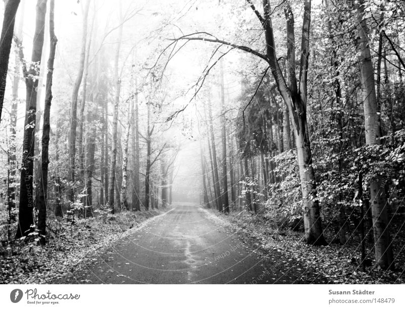 White Tree Black Far-off places Street Forest Lanes & trails Fog Motor vehicle Driving Asphalt Traffic infrastructure Tire Black & white photo Ambiguous Curb