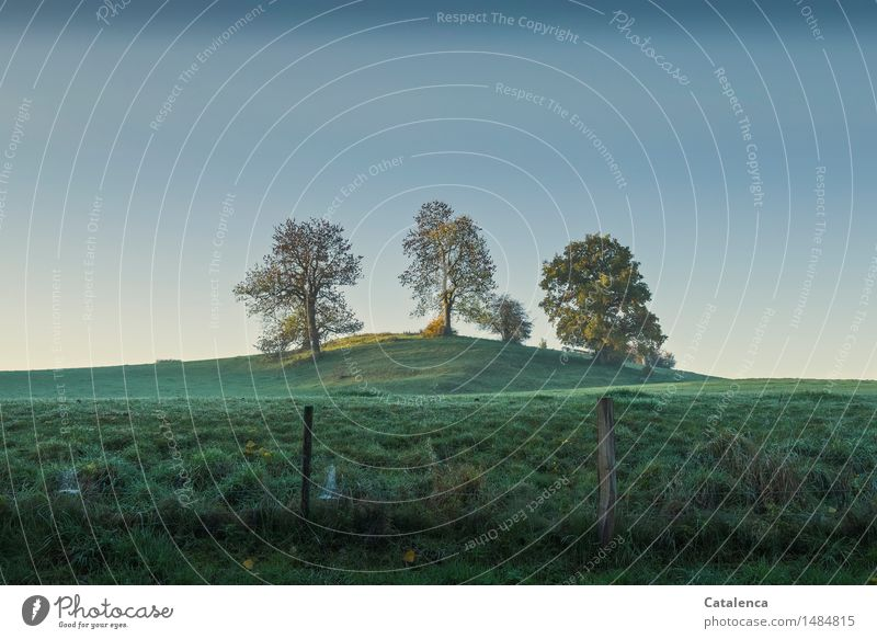 The blue in front Environment Nature Landscape Plant Sky Cloudless sky Autumn Beautiful weather Tree Ash-tree Meadow Hill Breathe Observe Relaxation To enjoy