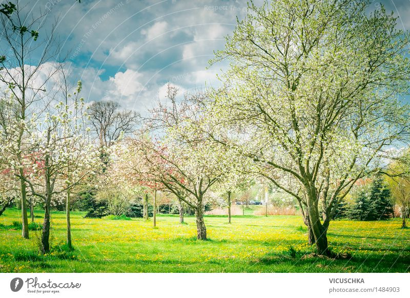 Blossoming trees in garden or park . Spring Nature Lifestyle Garden Sky Sunlight Beautiful weather Plant Tree Leaf Park Design Style Landscape Bud