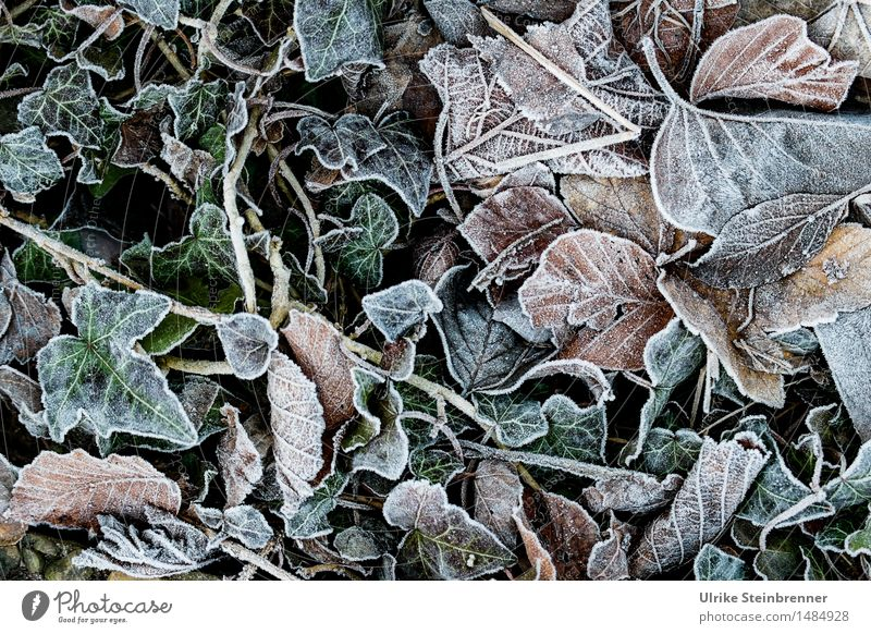Nature Plant Leaf Winter Cold Environment Autumn Natural Grass Death Garden Lie Ice Happiness Wet Transience