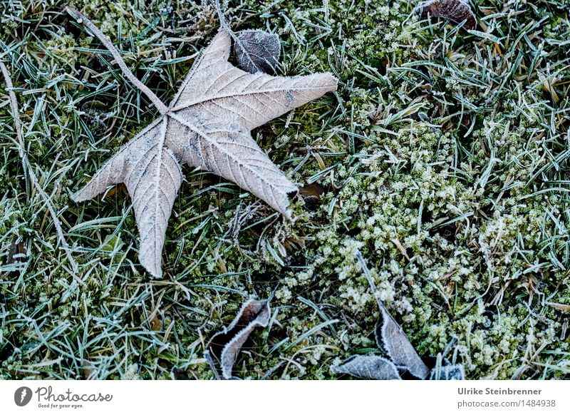 Nature Plant Leaf Winter Cold Environment Autumn Natural Grass Death Garden Lie Ice Wet Transience Change
