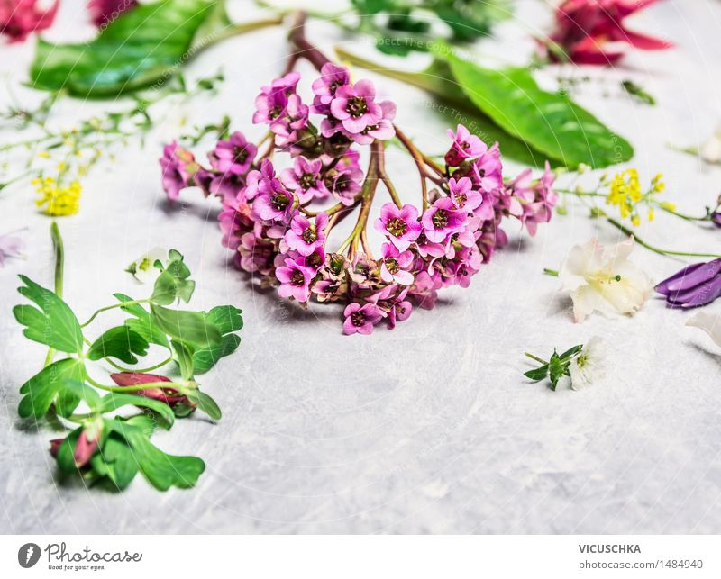 Spring plants and flowers from the garden Style Design Leisure and hobbies Summer Garden Decoration Table Nature Plant Flower Bouquet Blossoming Pink Floristry