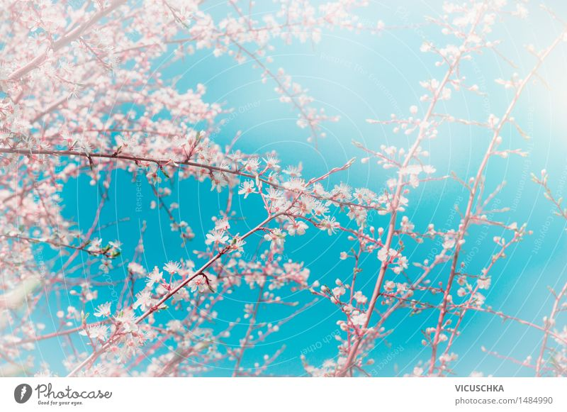 Sky Nature Plant Blossom Spring Style Background picture Garden Pink Design Park Blossoming Beautiful weather Soft Asia Bud