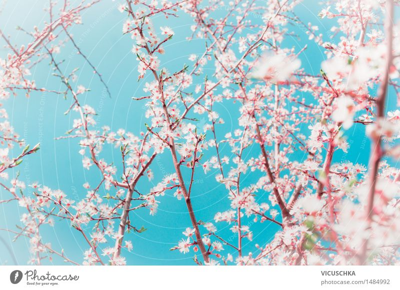 Sky Nature Plant Blue White Tree Leaf Blossom Spring Style Garden Moody Pink Design Park Wind