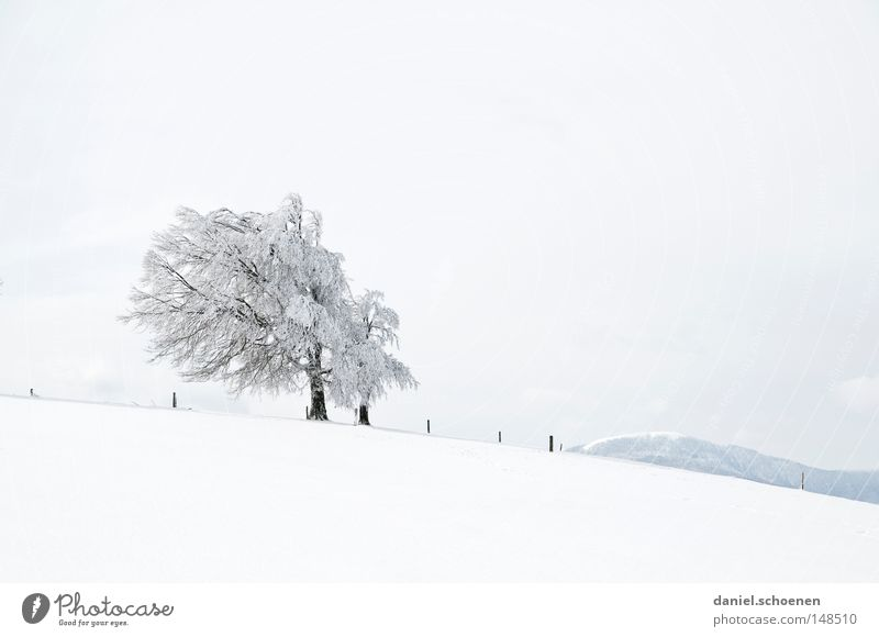 Sky Nature White Tree Vacation & Travel Winter Loneliness Cold Snow Mountain Germany Weather Background picture Fresh Clean Clarity
